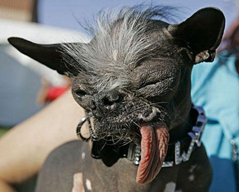 Oudste hond ter wereld is oosterbuur
